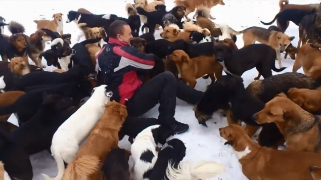 მამაკაცმა გადაარჩინა 450 ძაღლი, რომლებიც მასთან ერთად ცხოვრობენ (+ვიდეო)