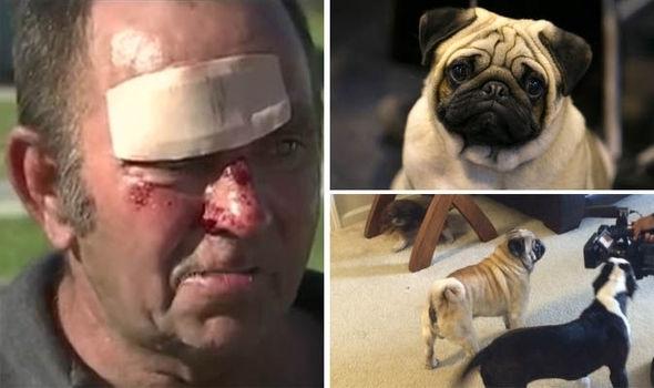 მამაკაცი, რომელიც ხანძრის დროს საკუთარი ძაღლების გადარჩენას ცდილობდა, დააპატიმრეს