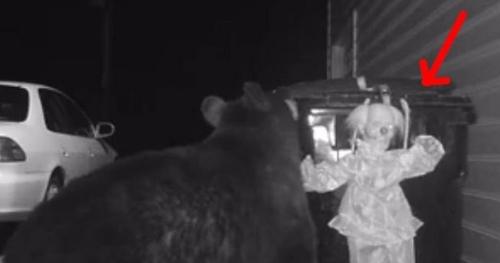 როგორ იცავს ოჯახი  ეზოში მდგარ ურნას დათვებისგან? (+ვიდეო)