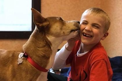 ექვსი წლის ბავშვმა სიკვდილისგან 1000-ზე მეტი ძაღლი იხსნა