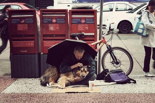 """ძაღლები, რომლებიც გეტყვიან- """"უანგარო სიყვარული არსებობს!"""""""