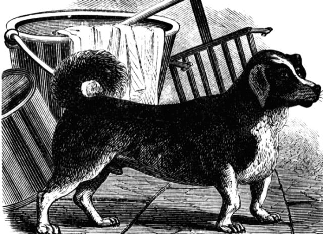 """""""ძაღლი ბორბლებში"""": როგორ ამუშავებდნენ ორი საუკუნის განმავლობაში ძაღლებს"""