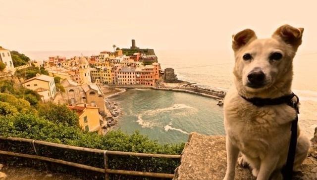 ქუჩიდან აყვანილი ძაღლი ახალ პატრონთან ერთად მსოფლიოს გარშემო მოგზაურობს (+ფოტო)
