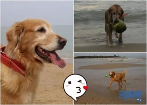 ძაღლი 5 წელია, სანაპიროს ნაგვისგან წმენდს