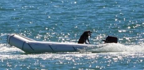"""მამაკაცი ოკეანეში გადავარდა, ძაღლი მარტო """"სეირნობდა"""" ნავით  (+ვიდეო)"""