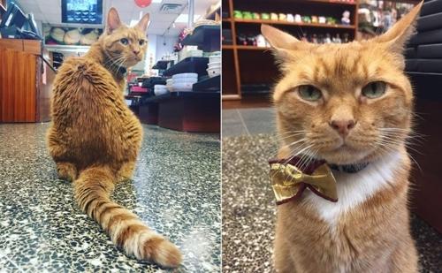 კატა ბობო 9 წელია, მაღაზიაში მუშაობს