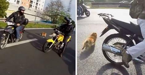 მოტოციკლისტებმა შეამჩნიეს, რომ დაბნეულ ძაღლს სატვირთო მანქანა ეჯახებოდა... (+ვიდეო)