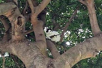 """ხეზე """"თოფით შეიარაღებული"""" კატა იჯდა. მოსახლეობამ პოლიცია გამოიძახა..."""