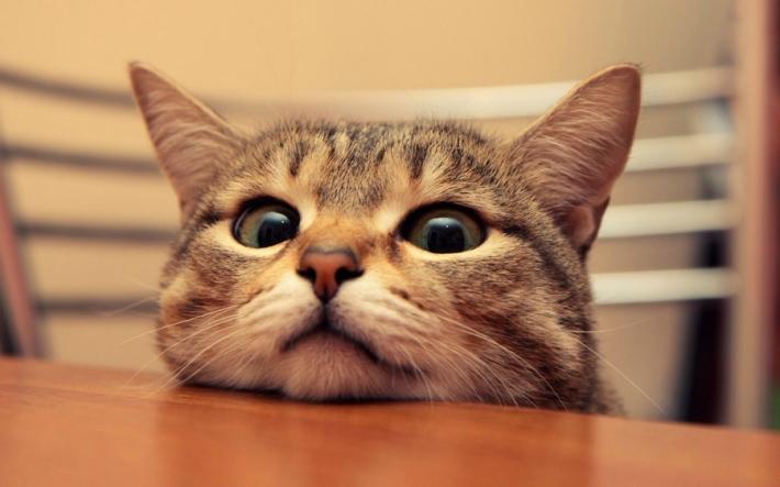 რატომ არ შეიძლება კატას თვალებში უყუროთ?