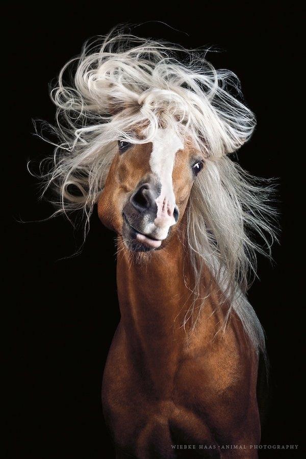 ცხენების მოყვარული ფოტოგრაფის მიერ გადაღებული საოცარი ფოტოები