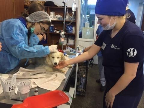 თბილისს ცხოველთა უფლებების დამცველი ბრიტანული ორგანიზაცია Mayhew Animal Home-ის ვეტერინართა გუნდი ესტუმრა