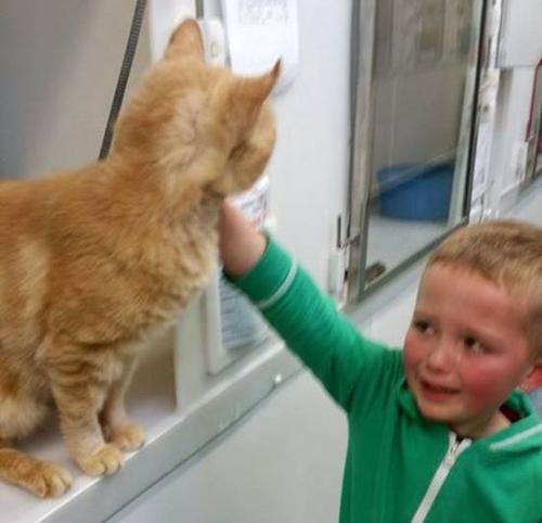 5 წლის ბავშვის მოულოდნელი შეხვედრა დაკარგულ კატასთან 18 თვის შემდეგ