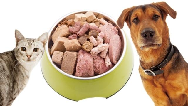 საინტერესო ფაქტები შინაურ ცხოველთა კვებაზე