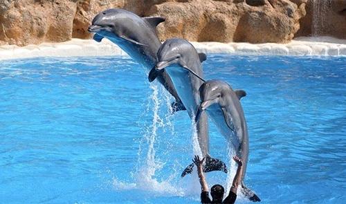 საოცარი ფაქტები დელფინების შესახებ და მათი წარმოუდგენელი შესაძლებლობები
