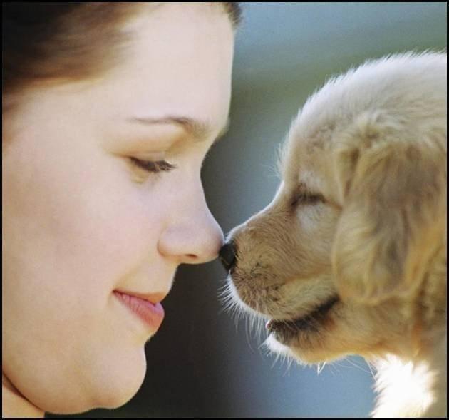 რატომ ირჩევს ძაღლი ოჯახში მხოლოდ ერთ მეურვეს?