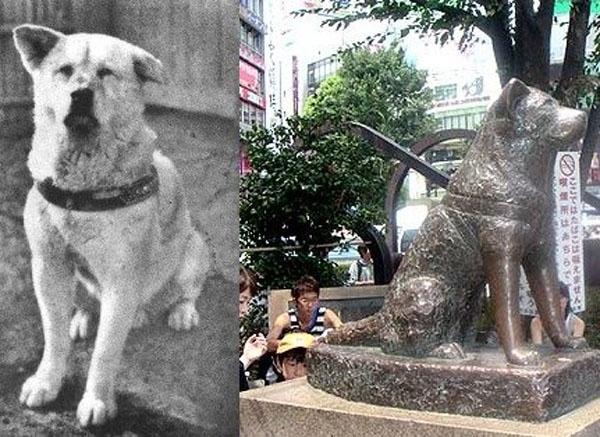 ერთგული ძაღლი ჰაჩიკო, რომელსაც იაპონელებმა სიცოცხლეშივე ძეგლი დაუდგეს (+ვიდეო)