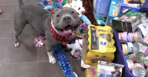თავშესაფარში მყოფი ცხოველები თავად არჩევენ საშობაო საჩუქრებს (+ვიდეო)