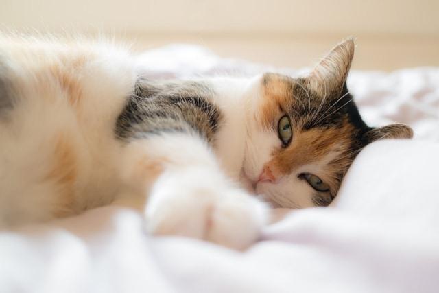 რატომ გვიყვარს კატები? 10 სახალისო მიზეზი, რომ კატა ყველას უნდა ჰყავდეს