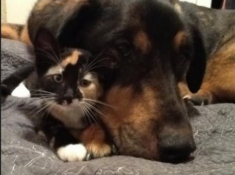 როგორ მოიქცა პატრონი, როდესაც კატამ საუკეთესო მეგობარი დაკარგა