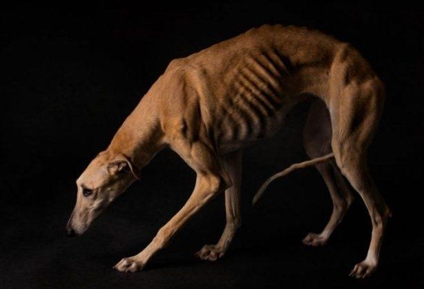 ნადირობის სეზონის დასრულების შემდეგ მონადირეების მიერ მიტოვებული ძაღლები (24 ფოტო)