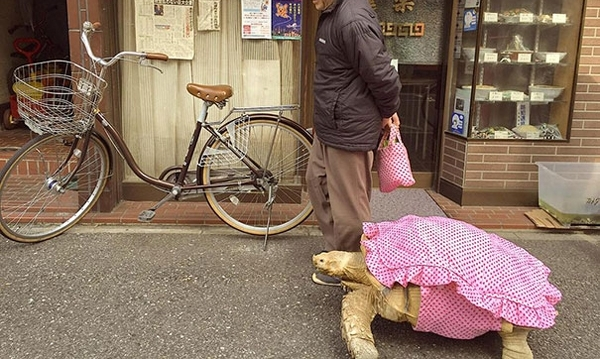მამაკაცი უზარმაზარ კუსთან ერთად ქალაქის ქუჩებში სეირნობს