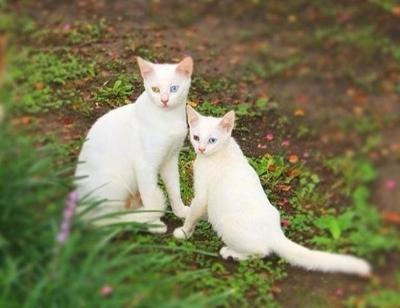 პატარა ცხოველები, რომლებიც ძალიან ჰგვანან მშობლებს (+ფოტო)