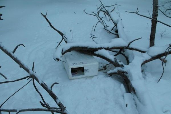 მამა-შვილმა ტყის პირას ყუთი შენიშნა...
