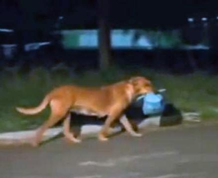 ძაღლი თავის უსახლკარო მეგობრებს აჭმევს (+ ვიდეო)