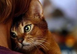 კატამ საკუთარი სიცოცხლის ფასად პატრონი მძარცველებისგან იხსნა