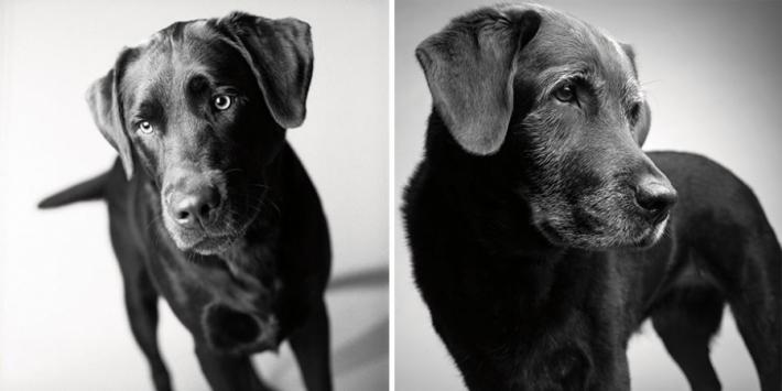 როგორ ბერდებიან ძაღლები - საინტერესო და ძალიან მგრძნობიარე ფოტოპროექტი (+ფოტო)