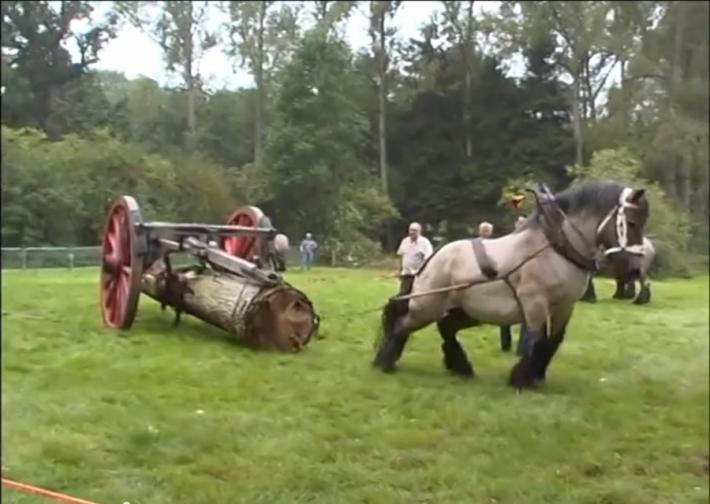 მსოფლიოში ყველაზე ძლიერი ტვირთმზიდი ცხენი (+ვიდეო)