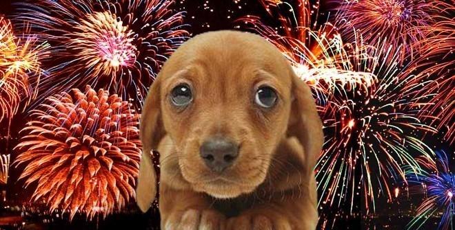 საახალწლო ფოიერვერკის ხმამ შესაძლოა ძაღლებში ნევროზი გამოიწვიოს