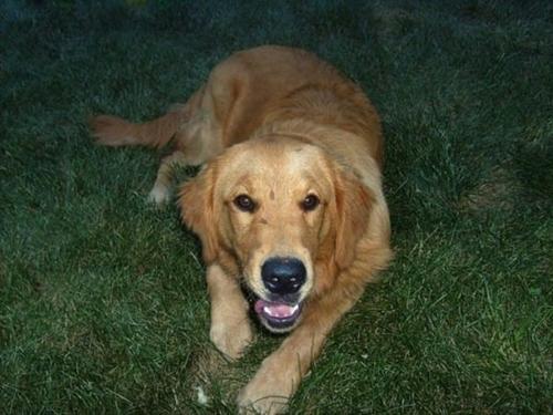 ეს ძაღლი ყოველ დღე სტუმრად მიდიოდა უცხო ოჯახში და იძინებდა, მაგრამ სულაც არ გავდა უპატრონოს...