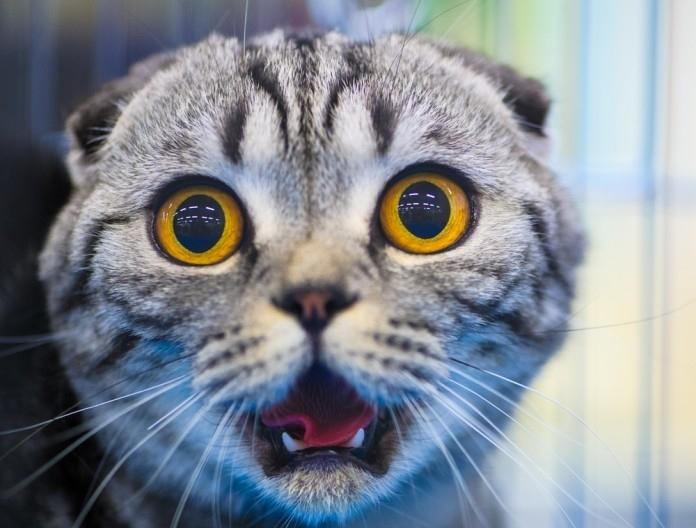 სპეციალისტის დამაჯერებელი ახსნა: რატომ ეშინია კატას კიტრის?
