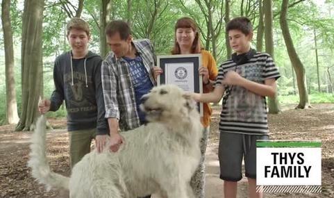 ყველაზე გრძელი კუდი - ბელგიაში ძაღლმა მსოფლიო რეკორდი მოხსნა (+ვიდეო)