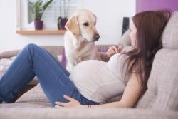 5 მინიშნება, თუ როგორ ხვდება ძაღლი ქალის ორსულობას
