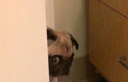 """რატომ """"უთვალთვალებს"""" ძაღლი პატრონს?"""