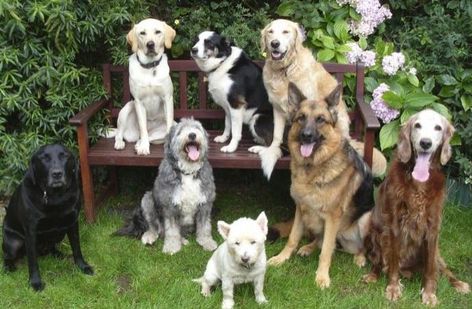 ძაღლის ყველაზე ცნობილი სახელები 2014 წელს