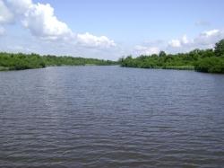 პალიასტომის ტბაზე თევზების სიკვდილიანობა, სავარაუდოდ ასფიქსიამ გამოიწვია