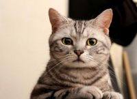 როგორი მეხსიერება აქვს კატას?