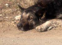 """კიდევ ერთი """"თბილისელი ჰაჩიკო"""" - ძაღლი, რომელიც ოჯახის სითბოსა და სიყვარულს დარაჯობს და სიცოცხლის ბოლომდე უდარაჯებს"""