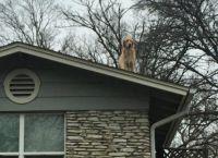 სახურავზე მჯდომი ძაღლის დახმარებას ყველა გამვლელი ცდილობს, თუმცა...