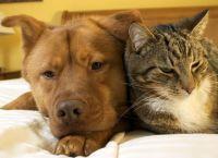 6 ნიშანი, რომ შინაური ცხოველი სიმსივნით იტანჯება