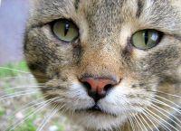 რამდენ ხანს ცოცხლობენ კატები?
