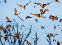 ყველაზე სწრაფი ფრინველების - შევარდენისა და ნამგალას რეკორდი ფრენის სისწრაფეში მოხსნილია!