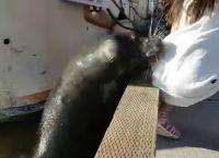 ზღვის ლომი პატარა გოგონას კაბაზე სწვდა და წყალში ჩაითრია… (+ვიდეო)