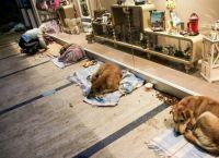 სტამბულში ადამიანები უპატრონო ძაღლებს ცივი ზამთრის გადატანაში ეხმარებიან (+ვიდეო)