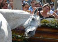 ცხენს 34 წლის პატრონი ავარიაში დაეღუპა, დაკრძალვისას მისმა განცდამ თვითმხილველები გააოცა (+ვიდეო)