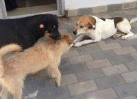 თბილისში ცხოველთა განმეორებითი/საკონტროლო რეგისტრაცია დაიწყო