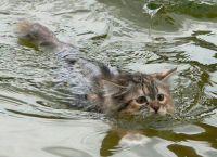 რატომ ეშინია კატას წყლის?